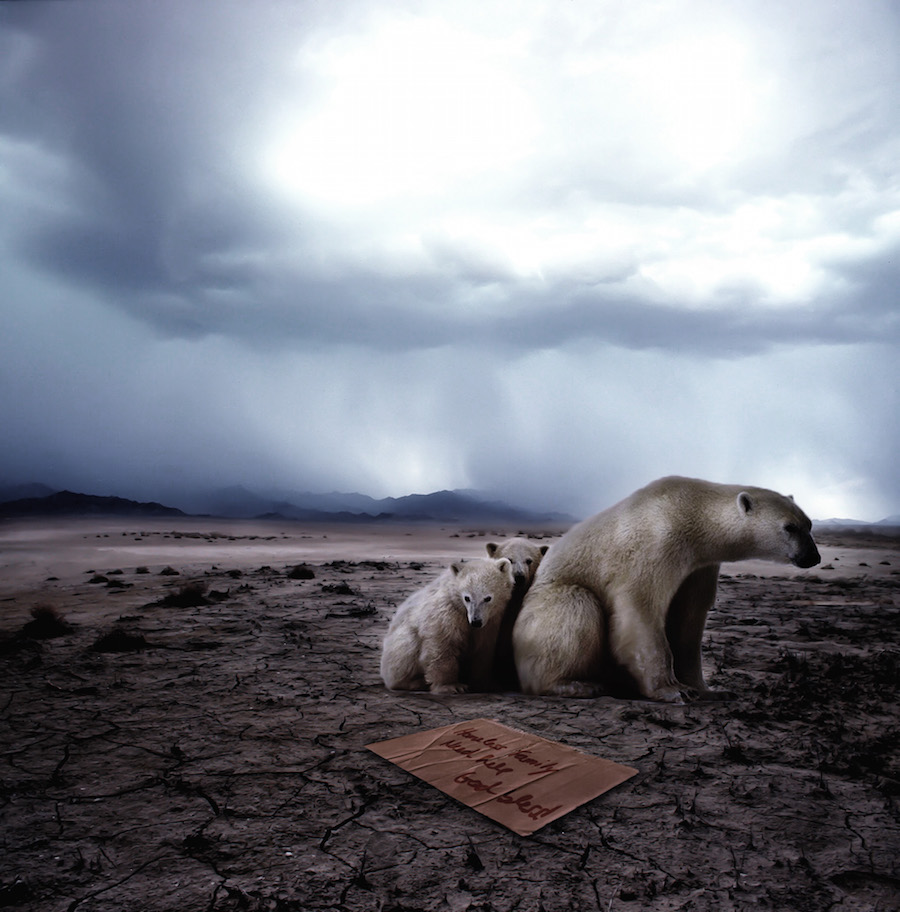 Homeless polar bears